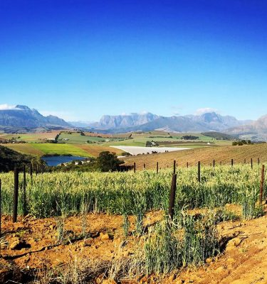 Simonsberg Conservancy Mountain Bike Tour