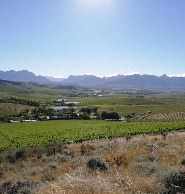 Cape Winelands mountain bike tour