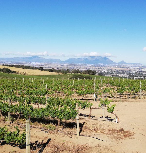 Cape Winelands mountain bike tour