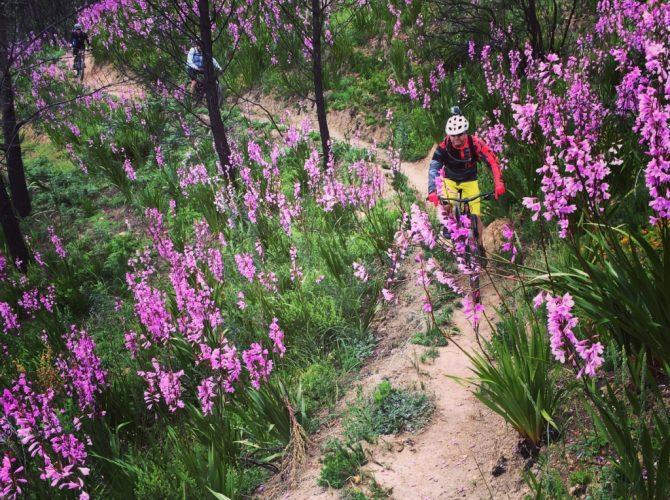 Simonsberg Mountain Bike Tour Stellenbosch